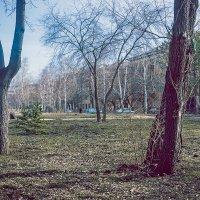первая зелень :: Андрей Пашков