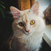 Кот с жёлтыми глазами. :: Александра Салыжина