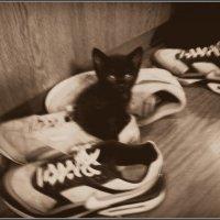 Вот одену я кроссовки! Буду бегать стометровки! :: Ольга Кривых