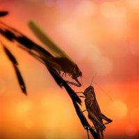 На закате, самые романтичные признания... :: Сергей Михайлов