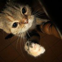 Я требую внимания! :: Наталья Нарсеева