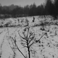 По заснеженным полям :: Светлана Шмелева