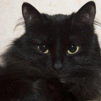 Кошка :: Евгений Константинов