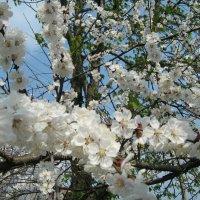 Запахло весной :: Юля