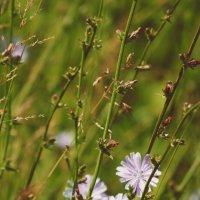 Flowers :: Ксения Зиборова