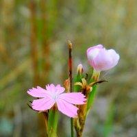 Последние летние цветочки :: Лидия Мамаева