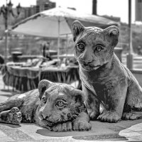 Композиция Два тигрёнка :: Александр Морозов