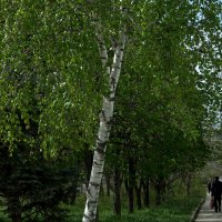 Пройдем по Абрикосовой..... :: ФотоЛюбка *