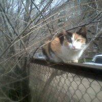 кошка :: МИХАИЛ КАТАРЖИН