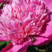 Цветы в саду. :: Андрей