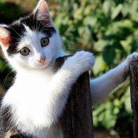 Игривый котенок :: Виктор