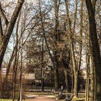 Аллея в городском саду :: Annie Kuzz