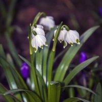 Весна.... :: Людмила lyudmila