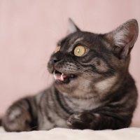 Любимый котиик :: Аня Манузина