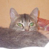 Кошка :: Иван Перенец