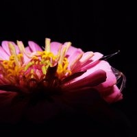 цветы :: Алёна Колесова