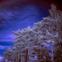 infrared :: Аркадий Алямовский