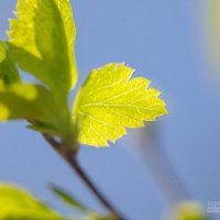 Свежая весенняя зелень :: Андрей Сазанов
