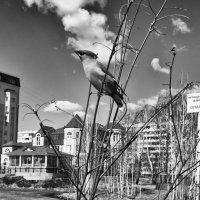 Птица :: Artem72 Ilin