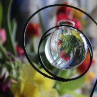 Цветы в миниатюре :: Dasha Starchikova