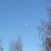 Луна осенним днем :: Александр Половников