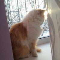 Кот у окна :: Александр Половников