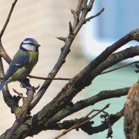 Помогите определить птицу :: Владимир Маслов