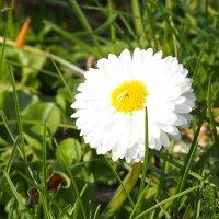 Весенние цветочки :: Edita Rimkute
