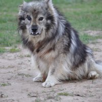 пёс :: Баттал Омаров