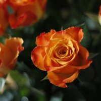 Портреты цветов :: esadesign Егерев