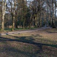 Загадочная тень. :: Яков Реймер