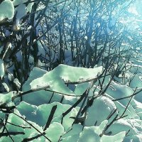 утро, солнце, лёд на ветвях :: Alexandr Nazarov