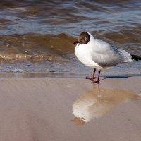 Портрет птицы с отражением :: Александр Творогов