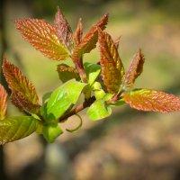 Первая листва :: Руслан Чустрак