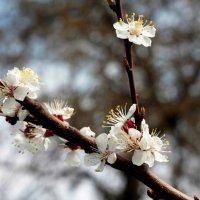 весна пришла :: Виктория Чуб