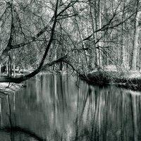 Reflection :: Полина Ваневская