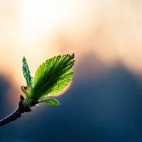 Первые листки весны :: Дмитрий Дубравин