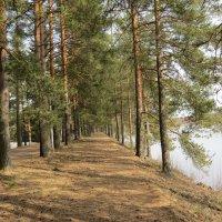 Лес, озеро, весна :: Людмила