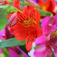Цветы :: K.L. PHOTOGRAPHY