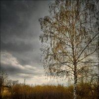 Перед дождём :: Tatiana Kretova
