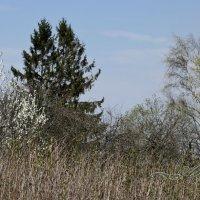 весна :: Alina Bukina
