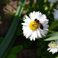 Цветочная весна.3. :: Alina Bondar
