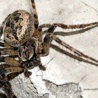 паук :: Pasha Zhidkov