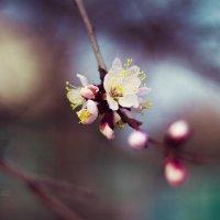 Весна :: Мария Шулик