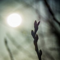 Весенний свет :: Роман Вольский