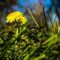 весна пришла :: Евгений Бутрамеев