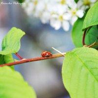 Весна!!! :: Вероника Подрезова