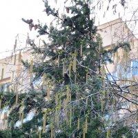 Украшение для елки :: Александр