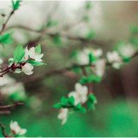 Такая необычная весна. Экспериментальная. :: Екатерина Парфиленко