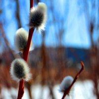 Капелька Весны :: Анастасия Добрынина